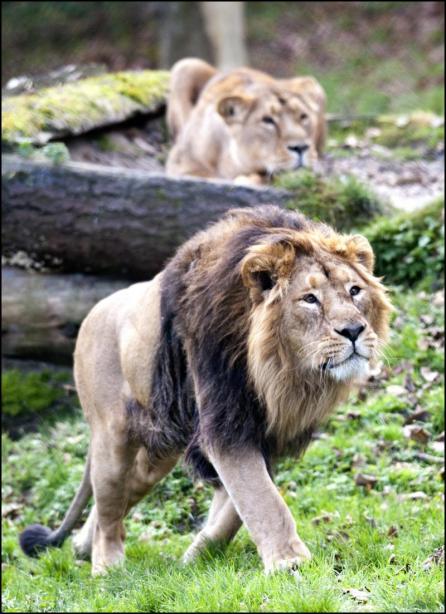 zoo-santo-inácio