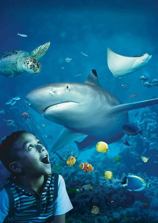 SEA LIFE Porto_Semanas do Tubarão