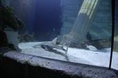 tubaroes-no-sea-life-porto