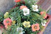 flores-rua-de-cedofeita