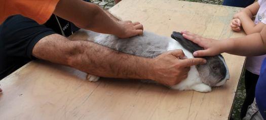 workshop-animais-da-quinta-serralves
